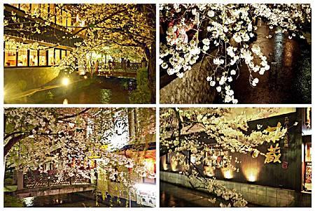 京都~高瀨川夜櫻 (16).jpg