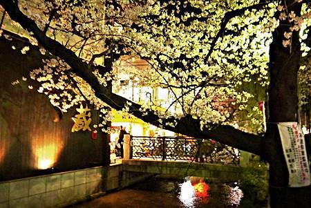京都~高瀨川夜櫻 (18).jpg