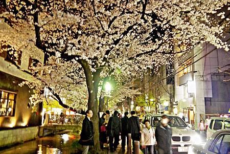 京都~高瀨川夜櫻 (19).jpg