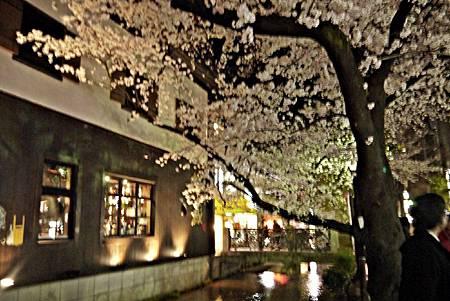 京都~高瀨川夜櫻 (21).jpg