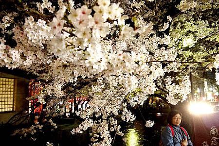 京都~高瀨川夜櫻 (22).jpg