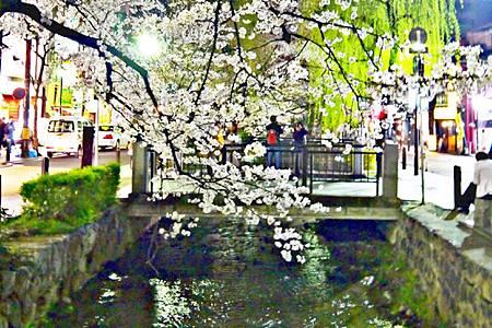 京都~高瀨川夜櫻 (23).jpg