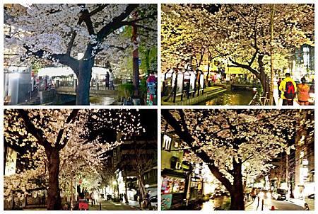 京都~高瀨川夜櫻 (24).jpg