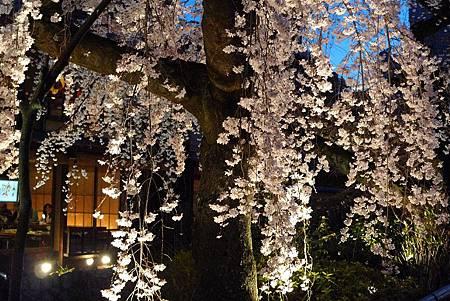 京都~高瀨川夜櫻 (25).jpg
