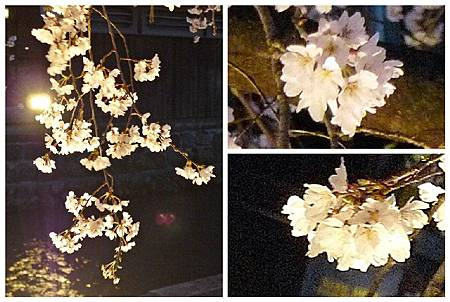 京都~高瀨川夜櫻 (29).jpg