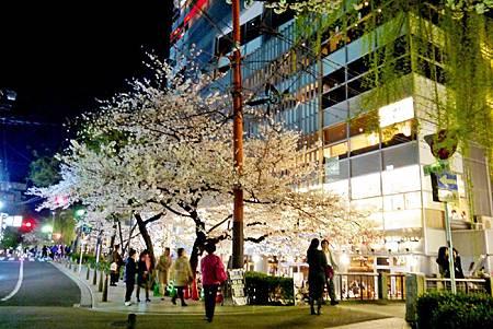 京都~高瀨川夜櫻