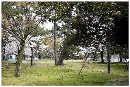 P1440888 (1) 奈良~奈良公園.jpg