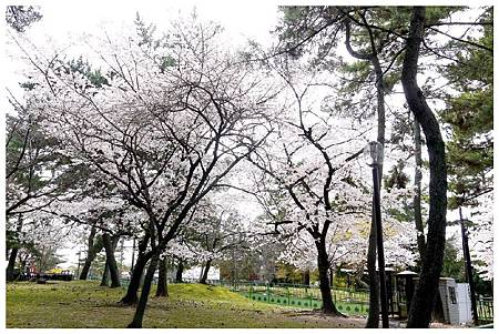 P1440888 (3) 奈良~奈良公園.jpg