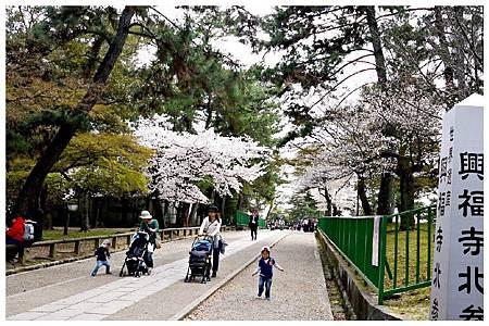 P1440888 (5) 奈良~奈良公園.jpg