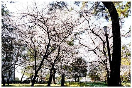 P1440888 (7) 奈良~奈良公園.jpg