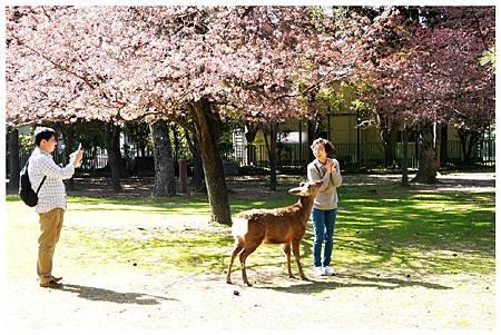 P1440888 (9) 奈良~奈良公園.jpg