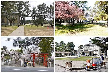 P1440888 (11.34.41.45) 奈良~奈良公園.jpg