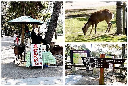 P1440888 (12.22.18) 奈良~奈良公園.jpg