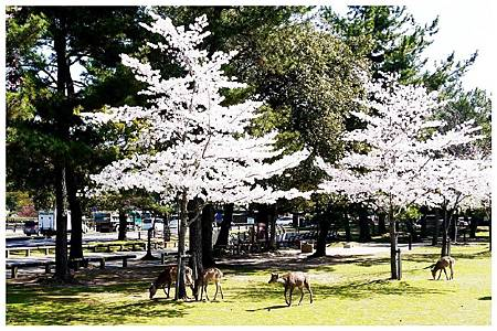 P1440888 (20) 奈良~奈良公園.jpg