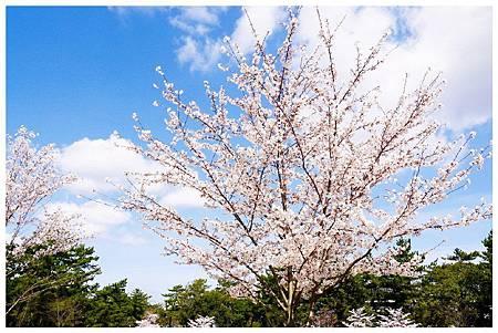 P1440888 (23) 奈良~奈良公園.jpg