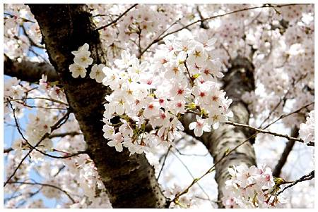 P1440888 (25) 奈良~奈良公園.jpg