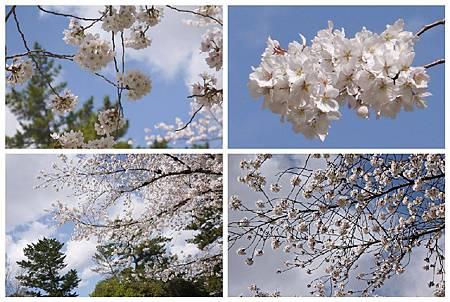 P1440888 (26.30.29.31) 奈良~奈良公園.jpg