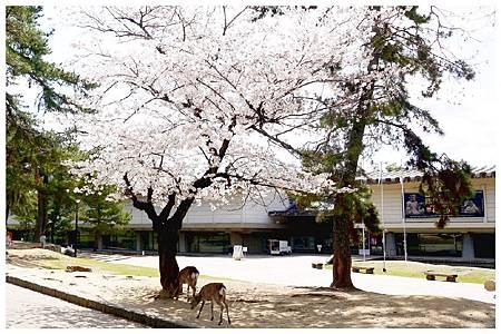 P1440888 (37) 奈良~奈良公園.jpg