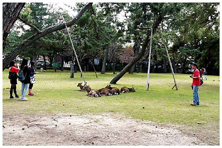 P1440888 (38) 奈良~奈良公園.jpg