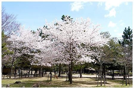 P1440940 奈良~.東大寺. (7).jpg