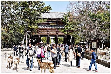 P1440940 奈良~.東大寺. (10).jpg