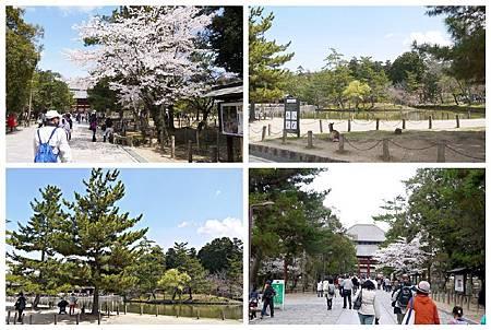 P1440940 奈良~.東大寺. (13.14.16.17).jpg