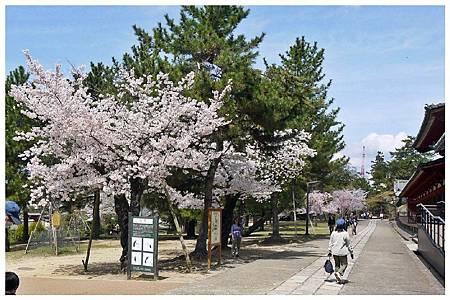 P1440940 奈良~.東大寺. (59).jpg