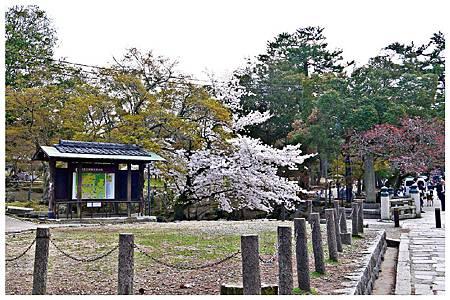 P1440940 奈良~.東大寺. (66).jpg