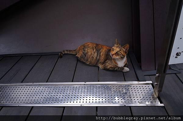 遇到的第一隻貓。