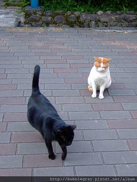 兩隻胖胖貓。