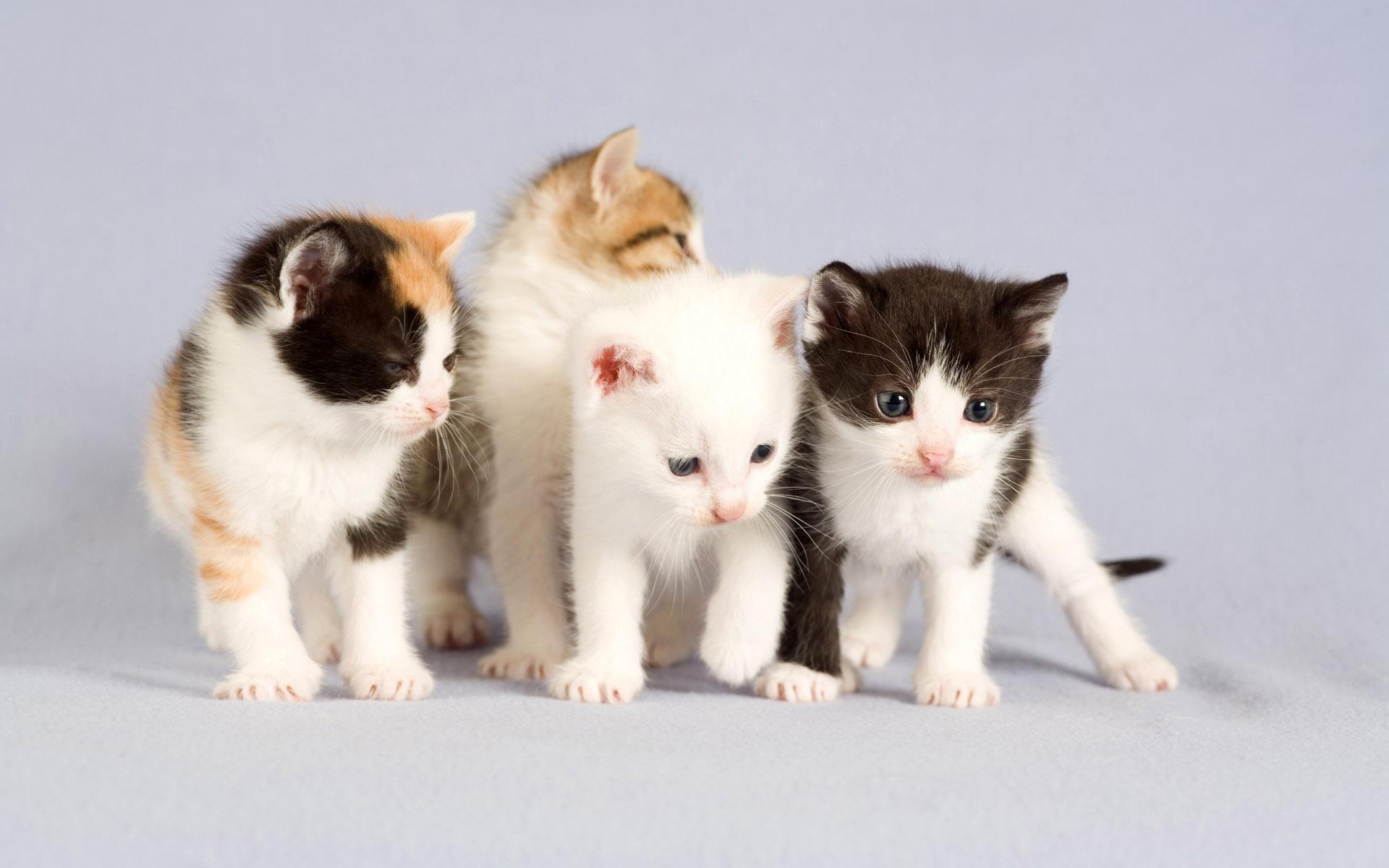 Hd Cat Wallpapers 1920x1080 69 Images: 【桌面佈景】貓咪桌布分享(38張) @ ♂月橘館♀ :: 痞客邦