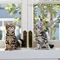 cuty_cat03.bmp