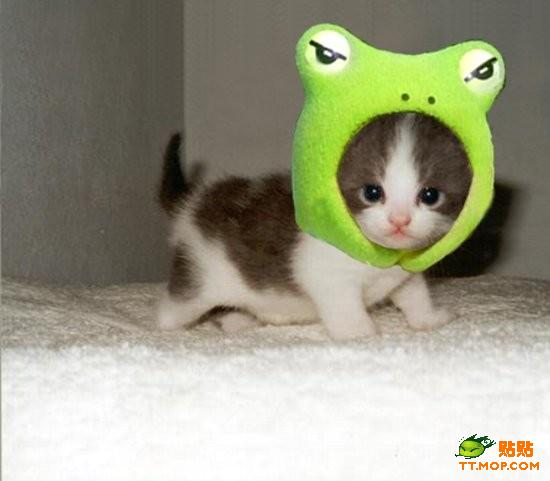 cuty_cat20.jpg