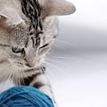 cuty_cat26.jpg