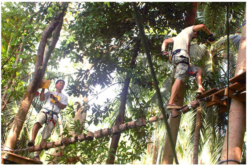 treetop1.png