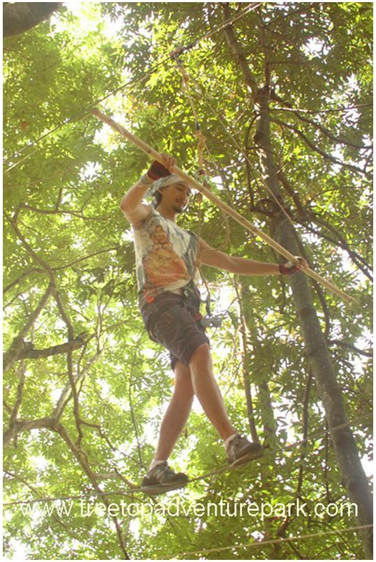 treetop4.png