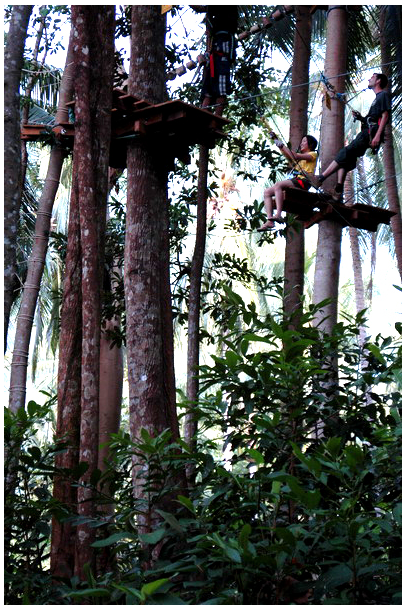 treetop2.png