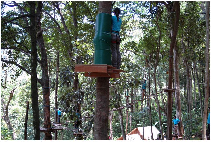 treetop8.png