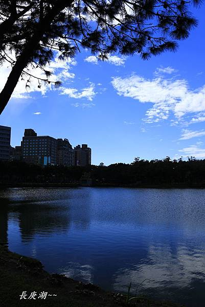長庚湖,楓樹坑花海三 022