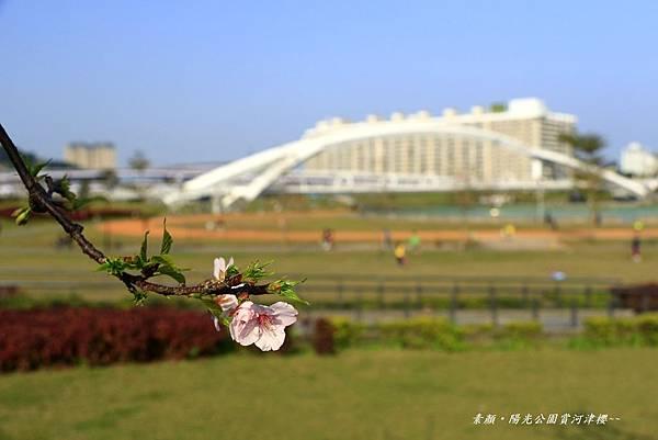 陽光運動公園‧陽光橋 052