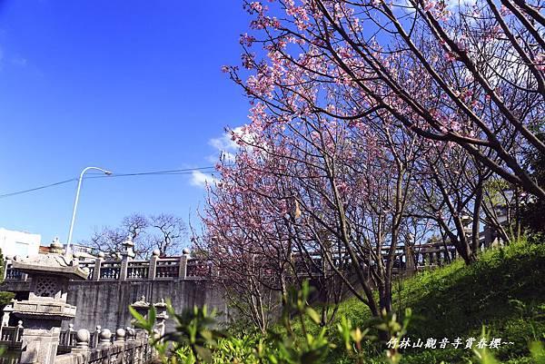 竹林寺春櫻 127