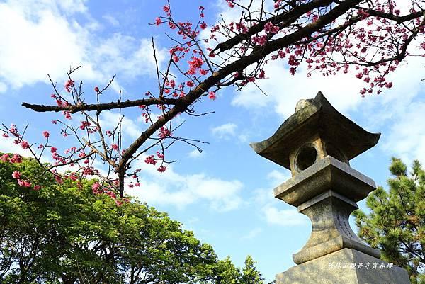 竹林寺春櫻 486