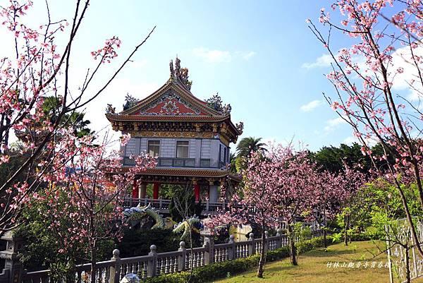 竹林寺春櫻 467