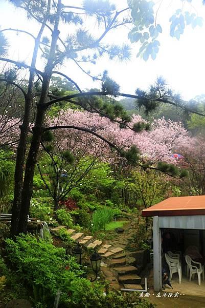 三芝吉野櫻民宅、楓樹湖 868