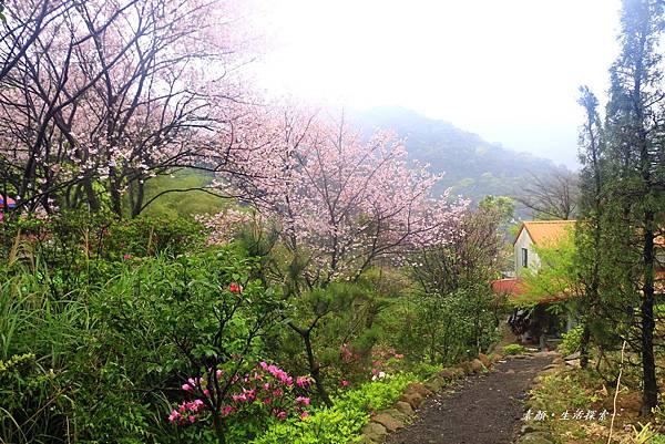 三芝吉野櫻民宅、楓樹湖 785.JPG