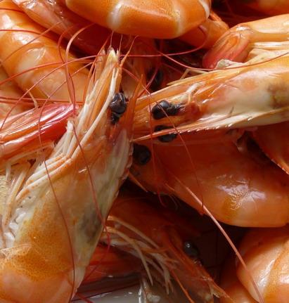 鮮美的水煮白蝦.jpg