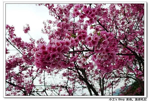 nEO_IMG_P1120645-1.jpg