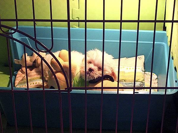 我最喜歡趴在狗玩偶上睡覺