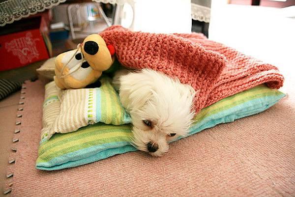 兩隻狗一起睡覺