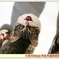 旅館陽台的小貓